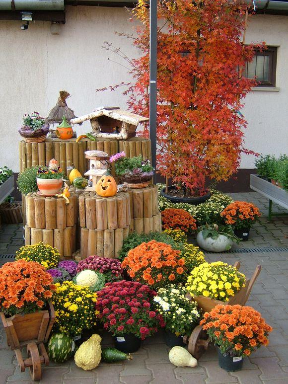 2010_10_23_Austria_Bellaflora 006.JPG