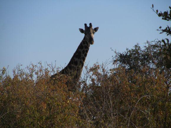 2013-05 Botswana Safari 011.JPG