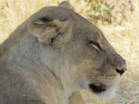 2013-05 Botswana Safari 159.JPG