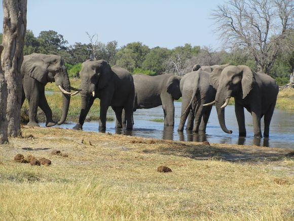 2013-05 Botswana Safari 095.JPG